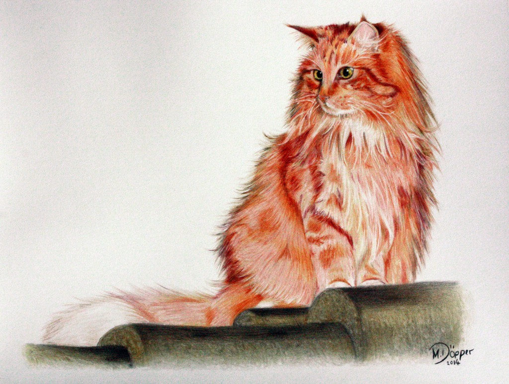 Gizmo, Polychromos on paper